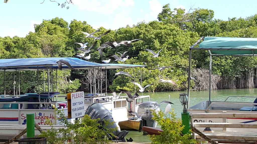 Saint Elizabeth Safari Boats 1