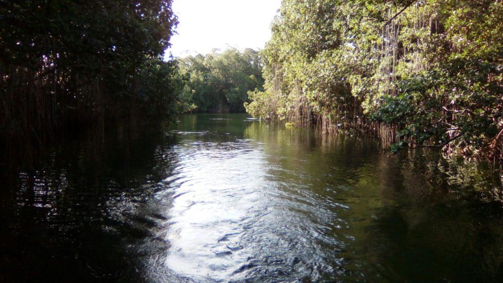 Saint Elizabeth Black River