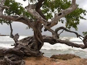 Treasure Beach one
